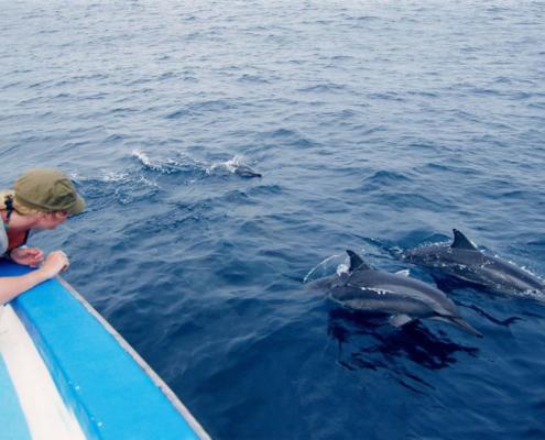 dolphin-safari in Maldives